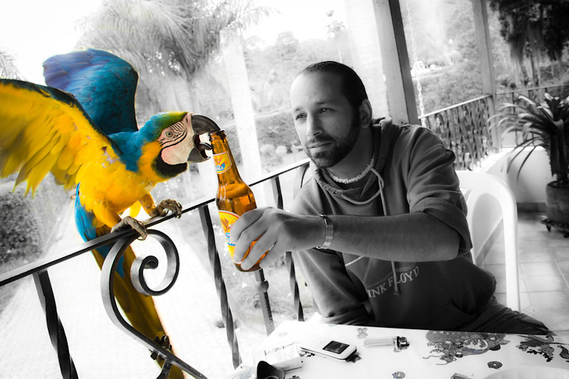 Aguila beers pets tropical